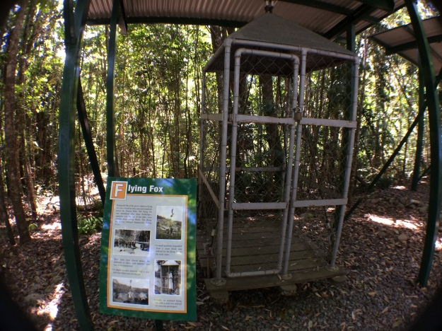 The Flying Fox Used To Carry People Across The Baron Falls